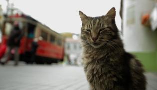 """Film """"Kedi - Sekretne życie kotów"""" w kinach od 28 lipca 2017"""