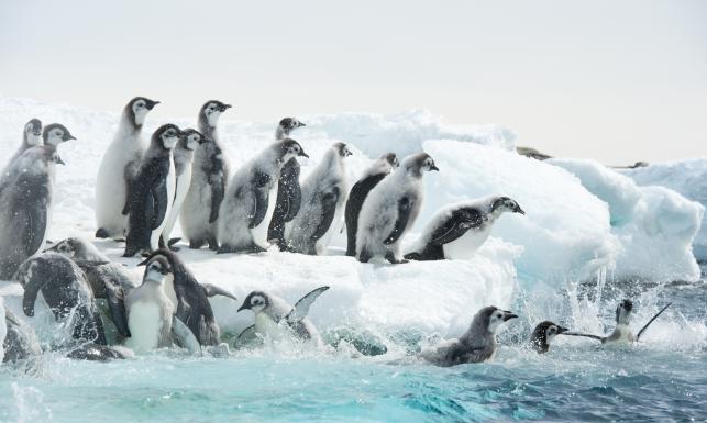 Antarktyda film dokumentalny online dating
