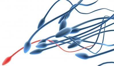 Sperma, czyli nowy eliksir młodości