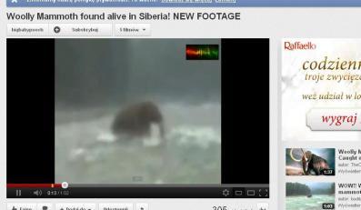 Mamut na Czukotce?