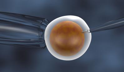 in vitro zapłodnienie komórka jajowa
