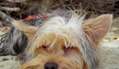 Pięć lat za porwanie psa
