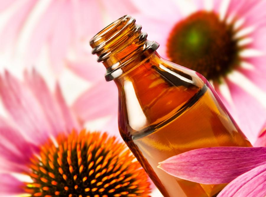 Co na przeziębienie i grypę - echinacea (jeżówka)