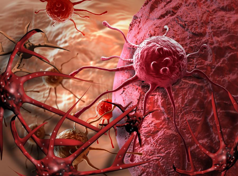 3. Raka można zagłodzić – 28% respondentów zgadza się ze stwierdzeniem, że podczas choroby nowotworowej powinno się ograniczyć spożycie produktów wysokokalorycznych, witamin  i minerałów, ponieważ mogą one przyspieszyć rozwój choroby
