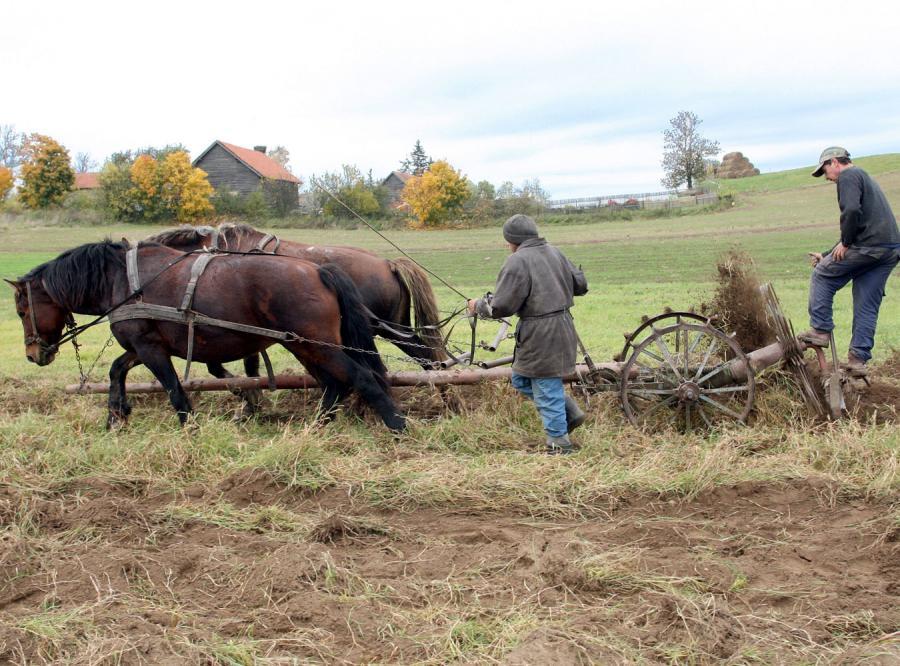Rolnicze emerytury trafią przed Trybunał Konstytucyjny