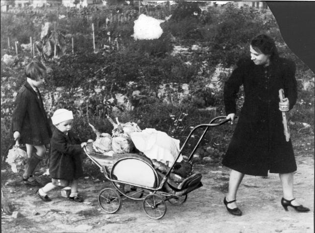 Na zdjęciu kobieta z dwójką dzieci, ciągnąca wózek pełen warzyw zebranych na działce, październik 1943 roku.