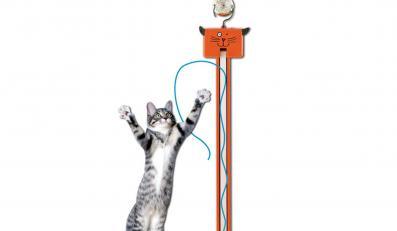 Jak rozbawić własnego kota?