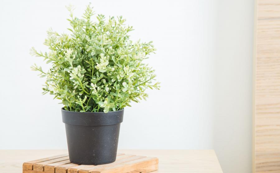 Postaw rośliny doniczkowe w każdym pokoju