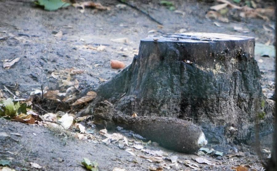 Pocisk wykopany przez niedźwiedzicę